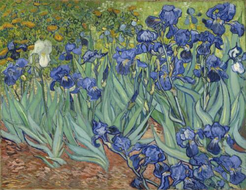 Irises_(1889)