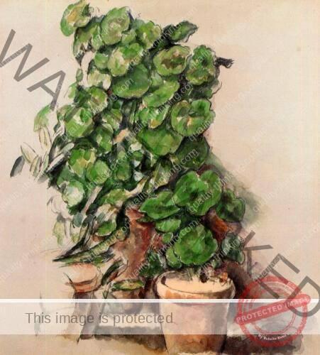 pots-of-geraniums