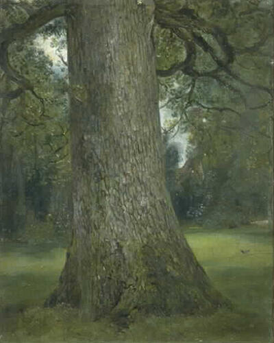 study-of-the-trunk-of-an-elm-tree-1821