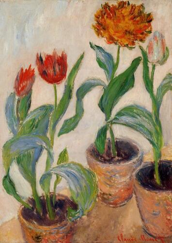 three-pots-of-tulips
